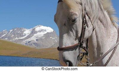 fin, cheval blanc, haut, figure