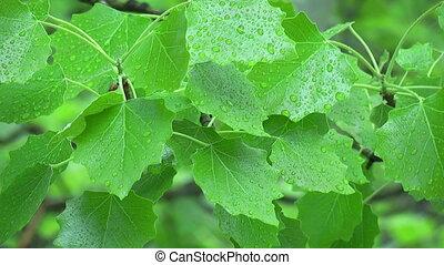 fin, feuilles, oscillation, vue