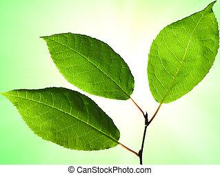 fin, feuilles, tremble, haut