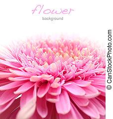 fin, fleur, haut