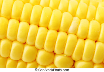 fin, maïs, haut
