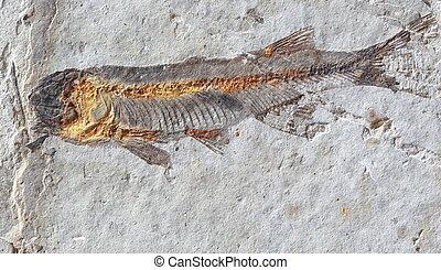fin, pierre, pêchez fossile, haut
