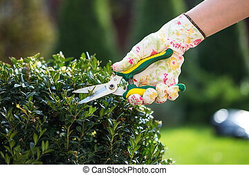 fin, plante, haut, jardinier, émondage