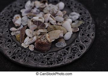 fin, plaque, métal, haut, seashells