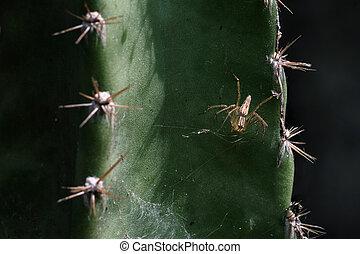 fin, toile, araignés, haut