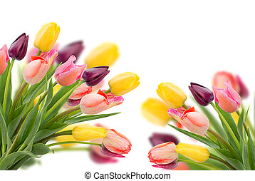 fin, tulipes, fleurs, haut, posy