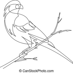 Finch Continuous line Vector Illustration - Check out this...