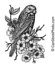 Finch on cherry branch