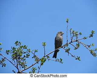 Another common finch, sitting on a branch