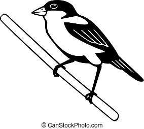 vector illustration of a songbird, the finch, perched on a branch or stick