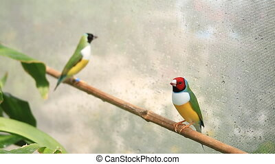 Finches on Perch
