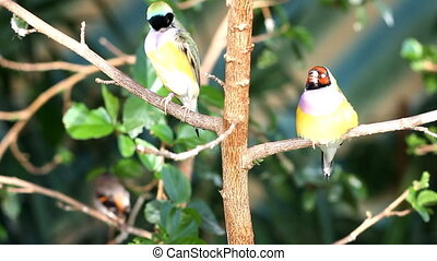 finches sitting on a branch in the forest