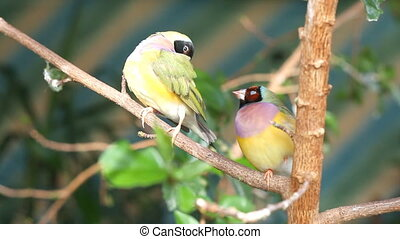 finches sitting on a branch in the