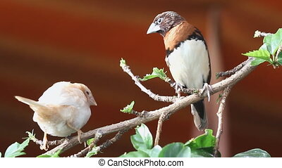 finches sitting on a branch