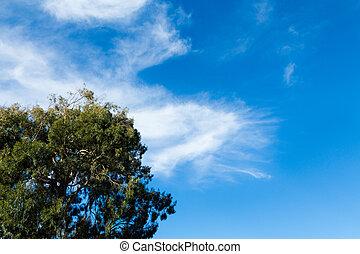 Find Sky Tree