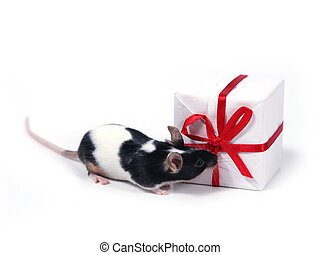 finding a present - little pet with present