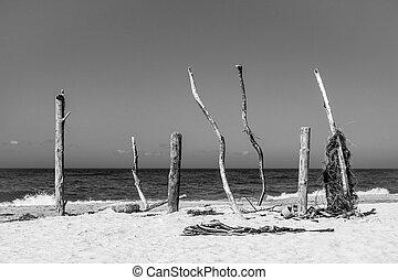 Baltic Se coast - Findings on the Baltic Se coast.