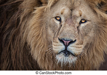 fine, leone