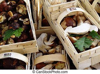 fine mushrooms