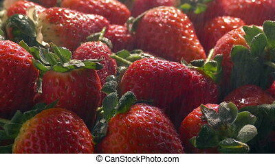 Fine Spray Keeps Strawberries Fresh - Fine water mist is...