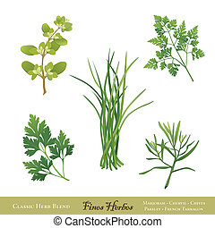 Classic French herb blend for cooking, Fines Herbes: Sweet Marjoram, Chervil, Chives, Italian Flat Leaf Parsley, French Tarragon isolated on white. EPS8 compatible.