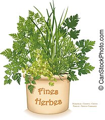 "Fines Herbes Garden Planter, ""fine herbs"" for traditional French cooking, left to right: Chervil, French Tarragon, Sweet Marjoram, Chives, Italian Parsley in clay flowerpot crock, isolated on white background. EPS8 compatible."