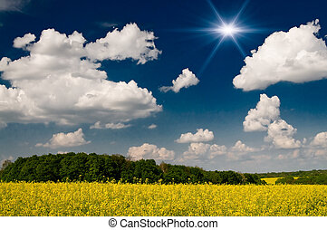 Charm rapefield and cloudscape with sunbeams.
