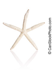 Finger Starfish