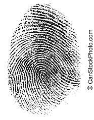 fingeraftryk, mønster, isoleret, på hvide