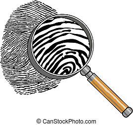 By means of a magnifier the fingerprint is considered