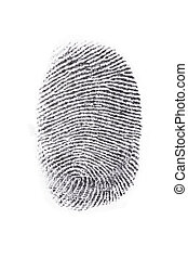 fingerprint - Fingerprint print output in a white background...