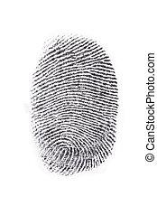 fingerprint - Fingerprint print output in a white...