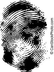 Fingerprint on a white background.