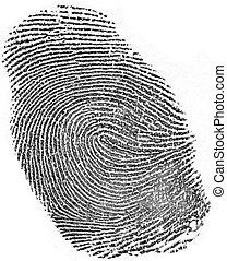 Fingerprint on white background.