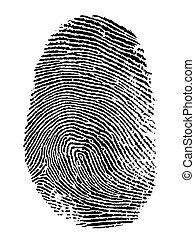 fingerprint - thumb print on white background