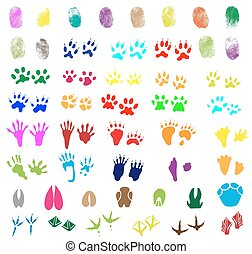 Fingerprints, animal and bird trail