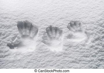 Fingerprints in the snow