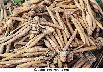 Fingerroot herb in asia  on market