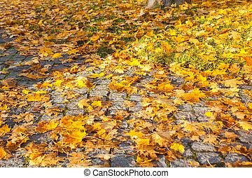 finland., coloridos, folhas, outono, passagem, maple