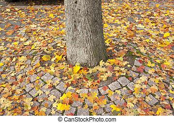 finland., coloridos, folhas, tronco, árvore, outono, passagem, maple
