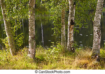 Finland landscape with birch forest and lake. Finnish background