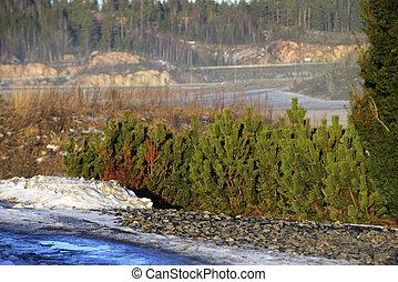 finland, nevoeiro, inverno, conifers, paisagem