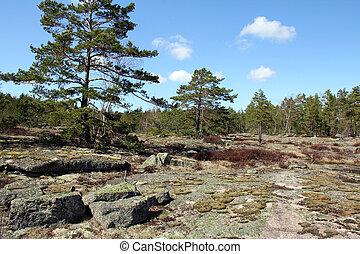 finlandia, foresta, paesaggio, roccia