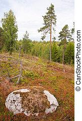 finnország, késő, nyár