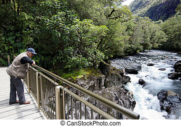 Fiordland - New Zealand - Visitor looks at Cleddau river in...