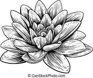 fiore, acquaforte, woodcut, loto, vendemmia, ninfea