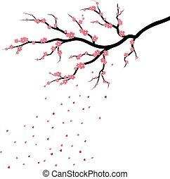 fiore, albero, giapponese, petali, sakura, ciliegia, cadere