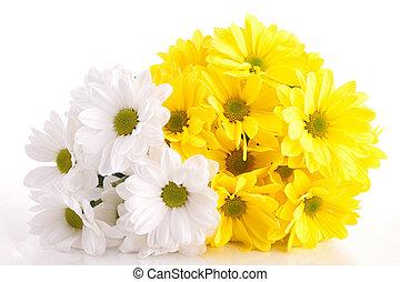 fiore bianco, fondo