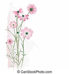 fiore bianco, fondo, primavera, colorito