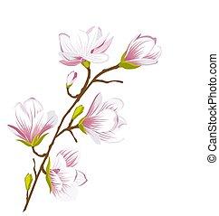 fiore, carino, magnolia, ramo, fiori